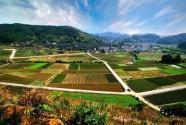 """大数据进村,县级审批""""村里办""""——河南邓州创新农村治理体系"""