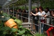 潍坊:果蔬飘香
