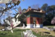 堪培拉春天里的中国风