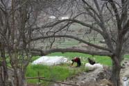 """西藏:""""扶贫书记""""带贫困村走上致富路"""