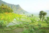 云南:多样的物种 多了重保护