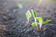 研究发现气候变化将导致土壤微生物种类增多