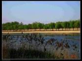 建设富裕乡村打造生态村庄