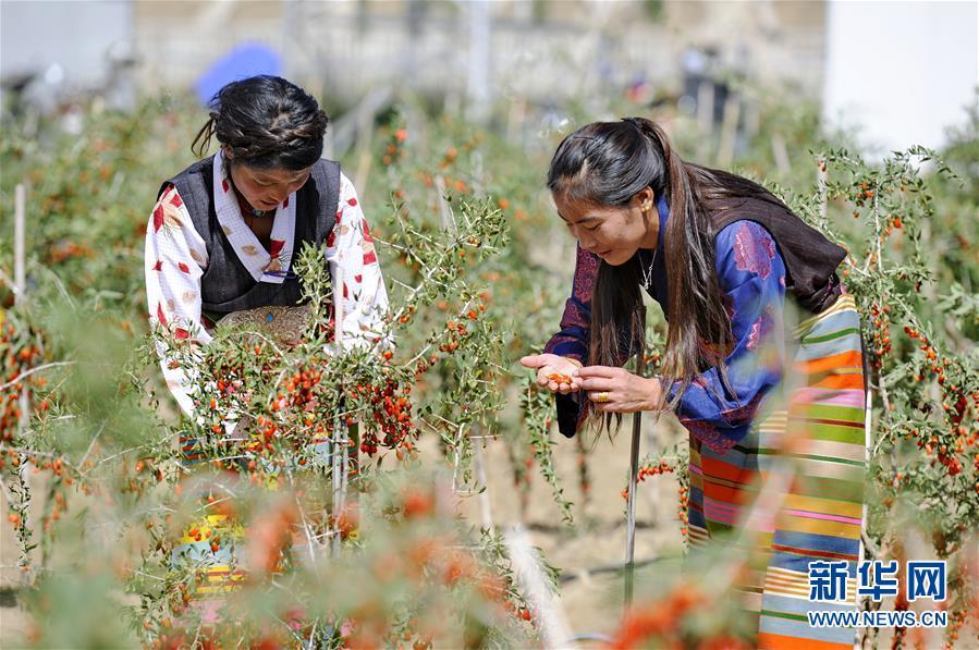 (新华全媒头条·两会特别报道·图文互动)(7)在推进高质量发展中创造广阔空间——从全国两会看奋进中国的发展机遇
