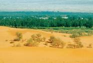 為讓荒漠變綠洲,接力治沙18年