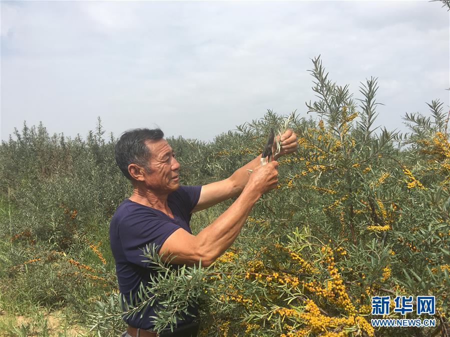 (权威访谈·聚焦中国经济亮点·图文互动)(4)防治土地荒漠化 推动绿色发展——专访国家林业和草原局副局长刘东生
