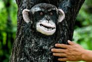 吉林长春:动植物园里看树雕画