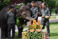 西雙版納舉行關愛亞洲象公益活動
