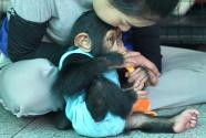 """在泰国动物园体验""""动物保姆""""生活"""