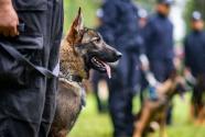 """我国首只警用工作克隆犬""""昆勋""""入警"""
