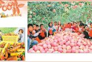 图片新闻:甘肃静宁贾河乡宋堡村小学生采摘苹果庆丰收