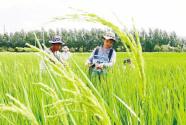 大学生种水稻上热搜 但新农科不止种田这么简单