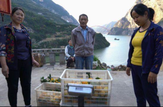 【特稿】三峡移民印记:板车上的3000公里与5万棵树2502.png