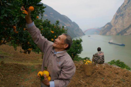 【特稿】三峡移民印记:板车上的3000公里与5万棵树3430.png