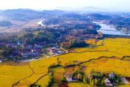 新中國崢嶸歲月|實施鄉村振興戰略