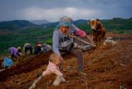 2019中国电商兴农报告发布:拼多多等平台助力农产品上行