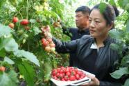 枣庄市阴平镇发展循环农业,助力乡村振兴