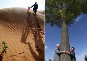 善待自然的回报 毛乌素沙地变绿洲