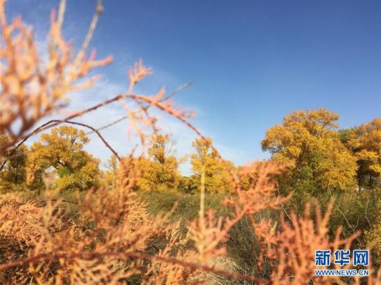 """(美丽中国)(6)秋色斑斓耀""""沙乡"""""""