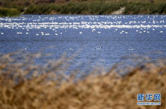 (环境)(2)七里海湿地迎候鸟迁徙季