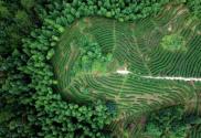 福建龍巖:高效用地,提升生態環境水平
