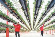 智慧栽培 助農增收