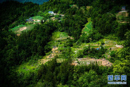 造林500萬畝,何以財政負擔不增加?